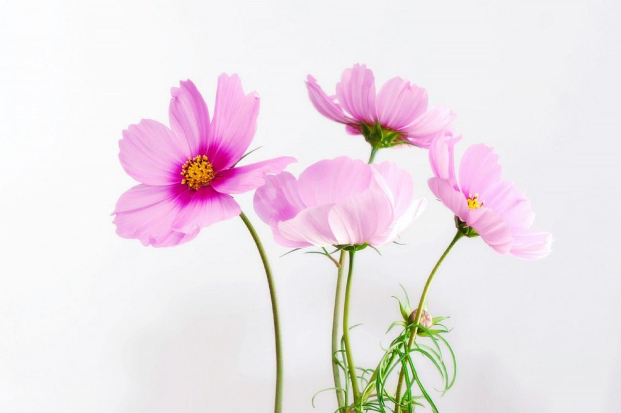 Rosa Blumen, Psychotherapie Kinderwunsch